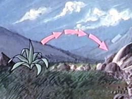 La Vie des plantes à fleurs IV : La Dissémination des semences