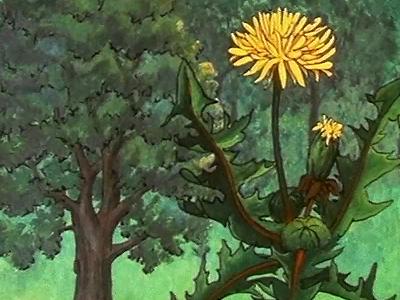 La Vie des plantes à fleurs VI : La Croissance