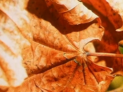 La Vie des plantes à fleurs VIII : La Mort