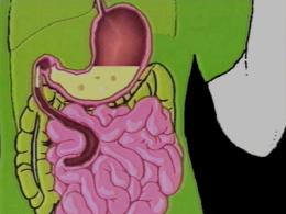 Une alimentation équilibrée I : Les Besoins de l'organisme