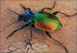 et un scarabée !